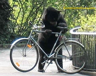 Bear_stealing_bike_medium