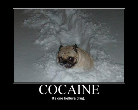 Pic-cocaine-dog_medium