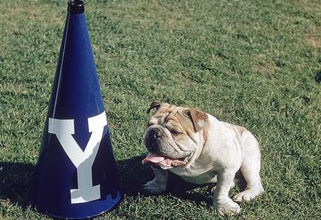 Yale-bulldog_medium