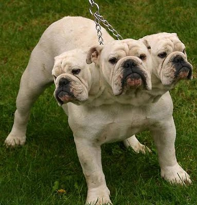 Three-headed-dog_medium