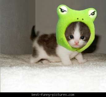 Best-funny-pictures_frog-o-kitty1_medium