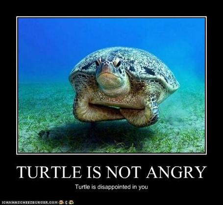 Funny-pictures-turtle-is-disappointed_medium