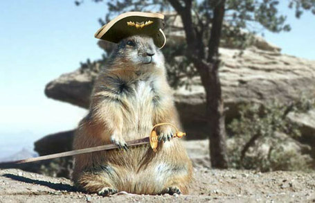 Pirate_squirrel_1_medium