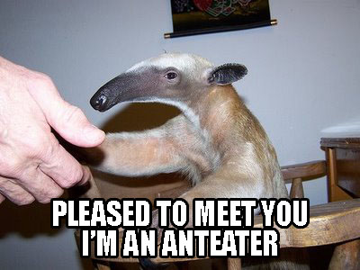 Pleased-to-meet-you-im-an-anteater_medium