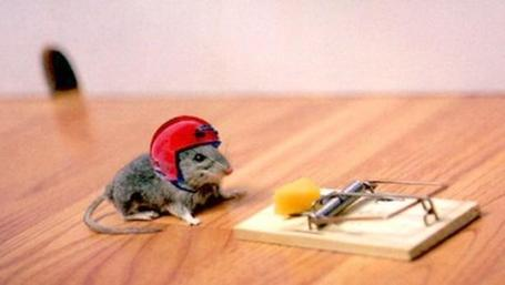 Mouse_with_helmet_medium