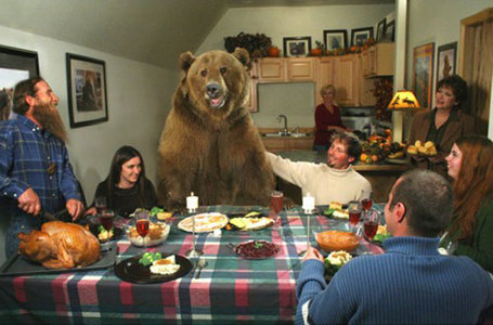 Brutus_grizzly_thanksgiving_medium