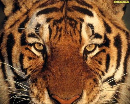 Tigers_2021_medium