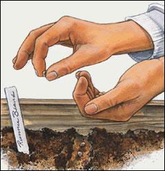 Garden-planting_medium
