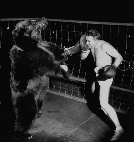 0000000000boxing_bear_medium