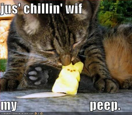 Funny-pictures-cat-eats-marshmallow_medium