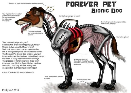 Bionic_dog_by_pookyns_5_medium