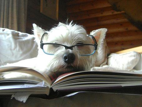 Smart_dog_medium