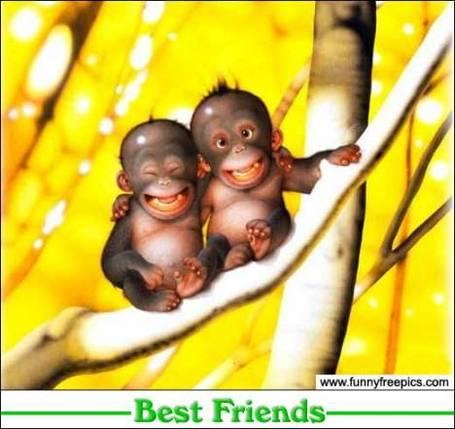 Best_friends_medium