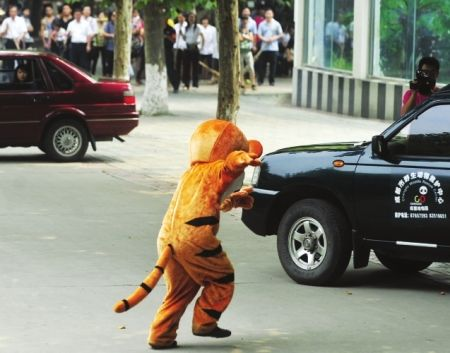 China-chengdu-zoo-escaped-tiger-drill-tigger-09_medium