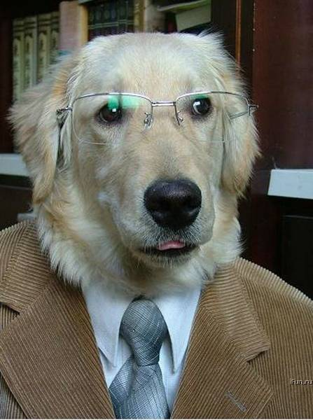 Professordog_medium