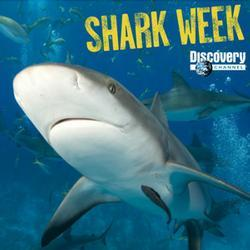Shark-week-photo_medium