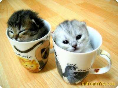 Cute-kittens-in-cups-pics_medium