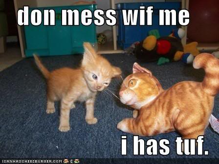 Funny-pictures-kitten-is-tough-and-_medium