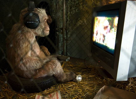 Monkey_watching_tv-thumb-550x402_medium
