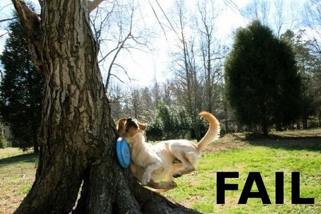 Dog_fail-14147_medium