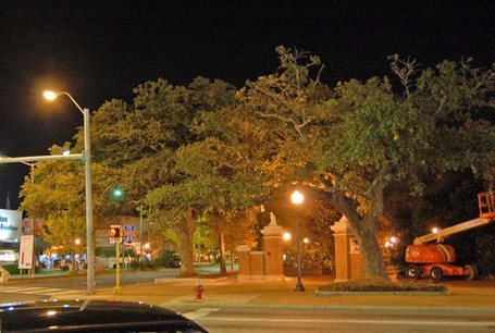 Toomers-corner-trees-night_medium