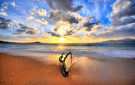 Tree-branch-on-beach_medium