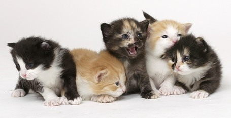 5kittens2_medium
