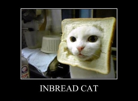 Inbread-cat_medium