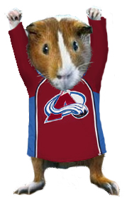 Avsjerseyguineapig_medium