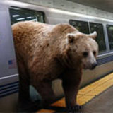 Bear-on-bart
