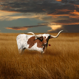 Texas_longhorn_with_rose_1_2
