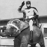 Batman_elephant