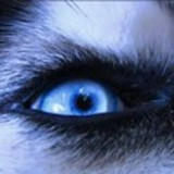 Husky_eye
