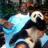Shaq-panda-480x476