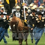 University-of-colorado-mens-sports-football-ralphie-leads-team-co-m-f-00016xlg