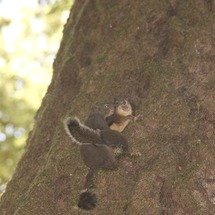 Chipmunk_on_tree