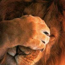 Lion_facepalm