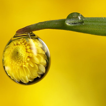 Flower_in_droplet