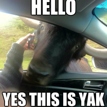 Hello_this_is_yak