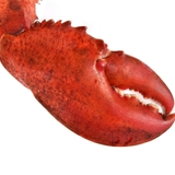 Lobster_claw