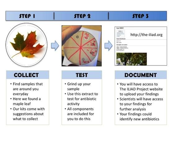 biology project report on antibiotics