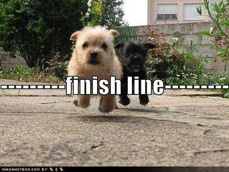 可爱的小狗图片悬停在终点线中